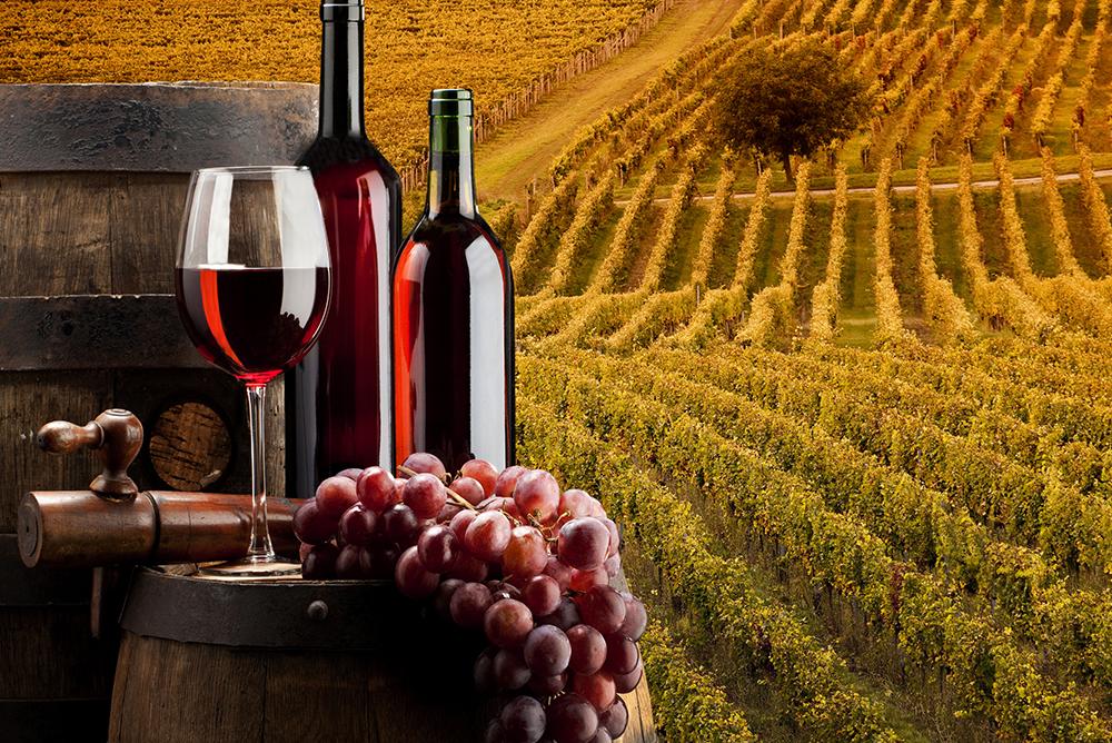 Masseria Cardillo – Azienda Vinicola