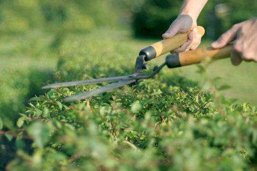 Verde per passione for Giardinieri verona