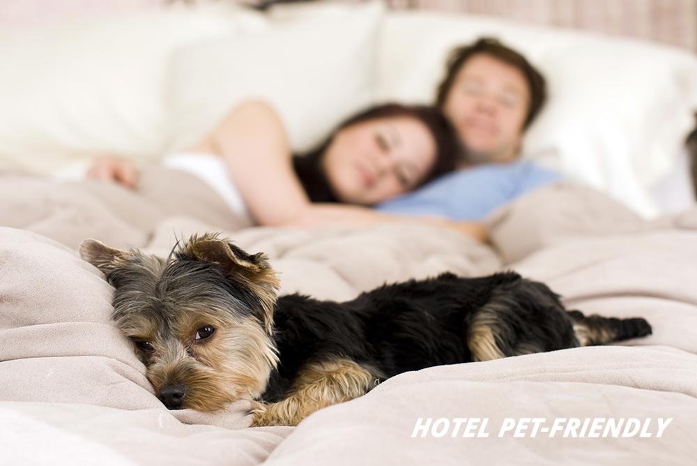 Hotel Pet-Friendly: quali caratteristiche?