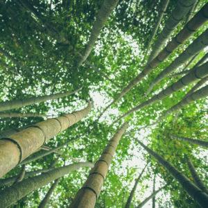 Turismo Sostenibile: le regole del viaggiatore green